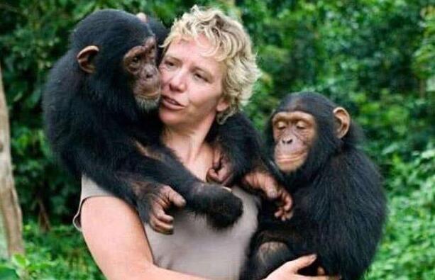 """女科学家""""献身""""大猩猩,为孕育后代,她成功了吗?"""