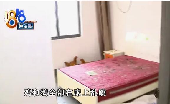 """房东开门后傻眼了:鸡和鹅在床上""""蹦迪""""?到处都是排泄物"""
