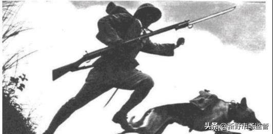 抗战时全国土狗反制日军军犬,厉害