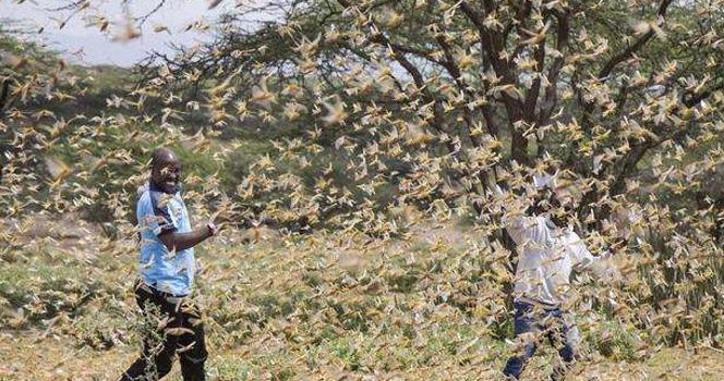 粮食全喂了虫!70万印军被迫从边境撤离,巴铁躲过一劫