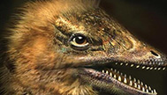 恐龙和鸡真的有亲缘关系?科学家干扰鸡的基因,让小鸡长了恐龙脸