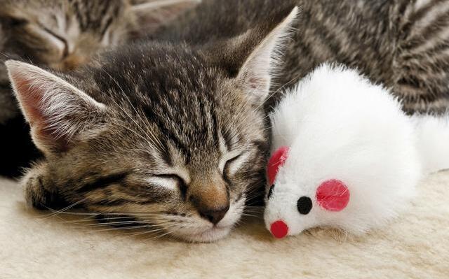 """为什么人死后不能让猫靠近尸体?原来不光是""""迷信""""这么简单"""