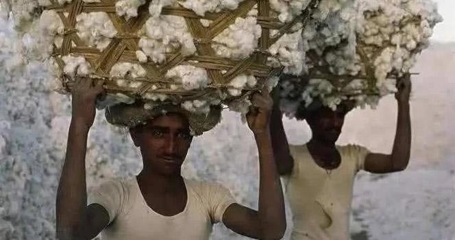 """澳大利亚用棉花""""威胁""""中国,哭得最凶的却是印度?"""