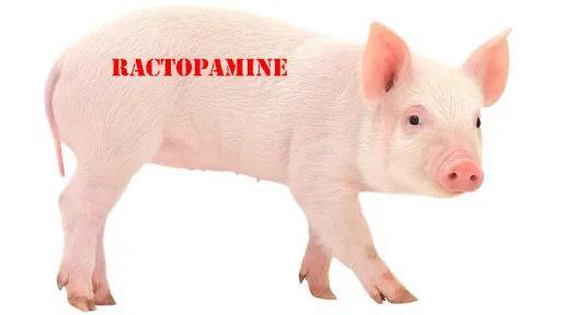 """台湾""""莱猪""""卖给大陆的背后:那些年我们在美国买的养猪场。"""