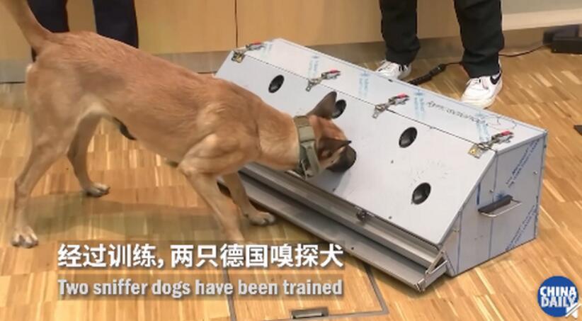 德国称两只嗅探犬能识别新冠患者 准确率高达94%