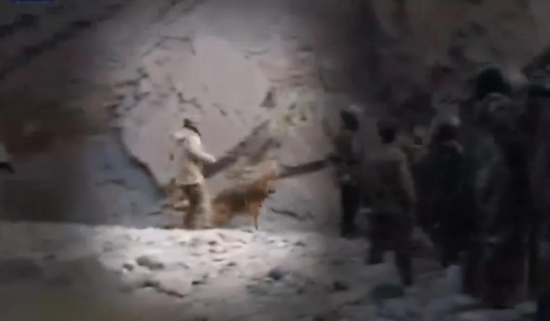 中印边境冲突中我军犬抢眼 解放军这群特殊战士有多强?