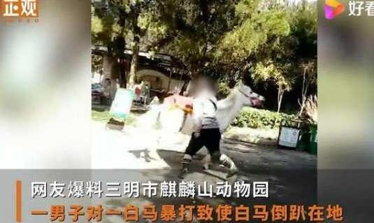 男子挥拳暴打白马,动物园竟回应:它不属于园内动物!
