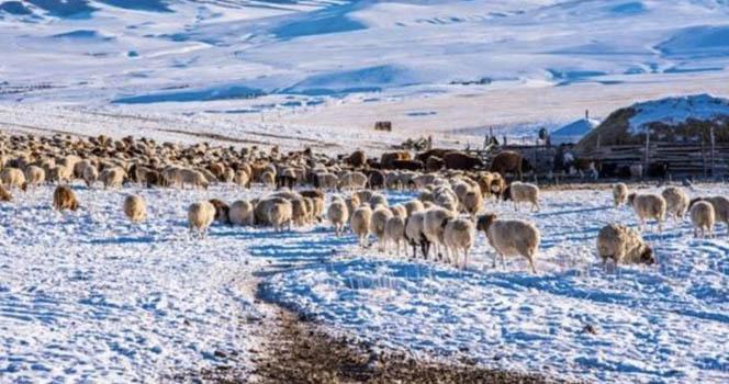中国人每少吃一块羊肉 蒙古戈壁就扬起了一股沙?